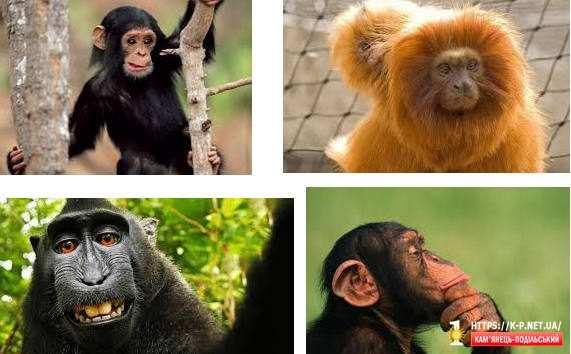 Мавпи, кузнечики, кабани, 3 штуки і гарбузи відсвяткували Володимира